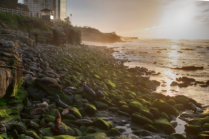 2018-12-21 18.23.49 - sea lions with sunset
